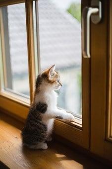 drutex okna pcv bydgoszcz